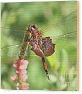 Red Saddlebag Dragonfly In The Marsh Wood Print