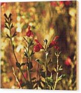 Red Salvia Wood Print