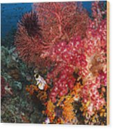 Red Sea Fan And Soft Coral In Raja Wood Print