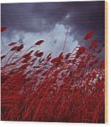 Red Sea Oats Blow In The Wind Wood Print