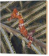 Red Seahorse On Caribbean Reef Wood Print
