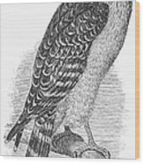 Red-shouldered Hawk, 1890 Wood Print