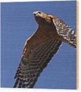 Red-shouldered Hawk - Apache Wood Print