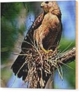 Red-shouldered Hawk Wood Print