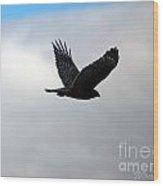 Red Shouldered Hawk In Flight 2 Wood Print