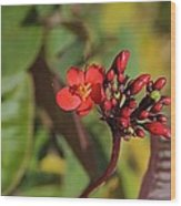 Red Snake Wood Print