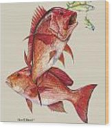 Red Snapper Wood Print