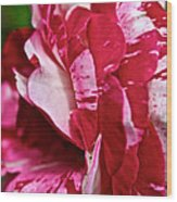 Red Speckled Rose Wood Print