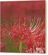 Red Spider Lily-1 Wood Print