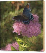 Red Spotted Purple Butterfly On Sedum Wood Print