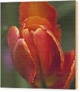 Red Spring Blooming Tulip Wood Print