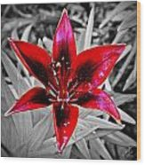 Red Star Lily Wood Print