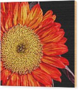 Red Sunflower II  Wood Print