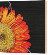 Red Sunflower IIi Wood Print