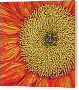 Red Sunflower Iv Wood Print