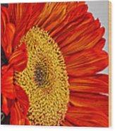 Red Sunflower V Wood Print