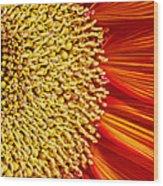 Red Sunflower Viiii Wood Print