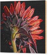 Red Sunflower X Wood Print