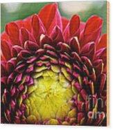 Red Sunrise Dahlia Wood Print
