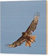 Red Tail Hawk 202-3 Wood Print