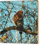 Red Tail Hawk Visitor Wood Print