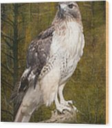 Red Tailed Hawk Perched On A Branch In The Woodlands Wood Print