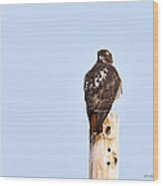 Red-tailed Hawk Surveying The Layout Wood Print