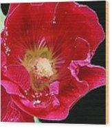 Red Tango Wood Print