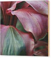 Red Ti - Cordyline Terminalis Wood Print