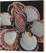 Red-toned Seashells Wood Print