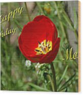 Red Tulip Birthday Wood Print