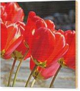Red Tulip Flowers Art Prints Spring Florals Wood Print