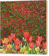 Red Tulip Flowers Wood Print