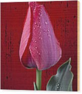 Red Tulip With Dew Wood Print