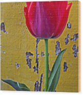 Red Tulip With Yellow Wall Wood Print