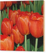Red Tulips Wood Print