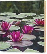 Red Water Lillies Wood Print