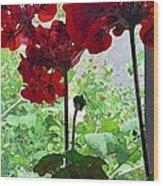 Red Window Geraniums Wood Print
