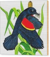 Red Wing Blackbird Dinner Wood Print