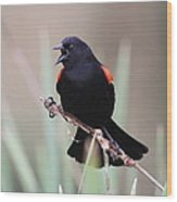 Red-winged Blackbird - Are You Listening Wood Print