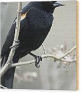 Red-winged Blackbird Agelaius Wood Print