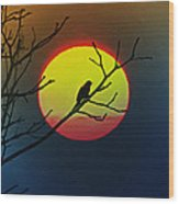 Red Winged Blackbird In The Sun Wood Print