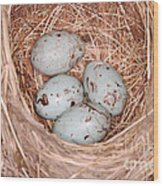 Red-winged Blackbird Nest Wood Print