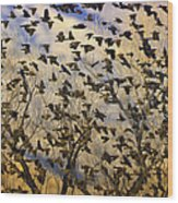 Red-winged Blackbirds At Sunset Wood Print