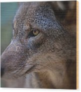 Red Wolf Stare Wood Print