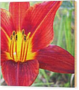 Red Yellow Lily Wood Print
