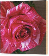 Red Zebra Rose  Wood Print