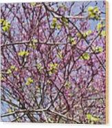 Redbud Sky Wood Print