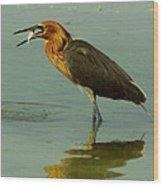 Reddish Egret Caught A Fish Wood Print