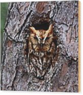 Reddish Screech Owl Wood Print